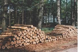 Afbeeldingsresultaat voor houtsoorten