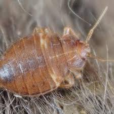 Bed Bug Treatment Get Rid Of Bed Bugs Exterminator Cost