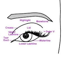 Make Up Jungle Eye Chart Diagram