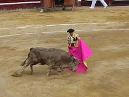 cruelty to animals  a bull fight in bogota a legacy of spanish culture despite being criticized by numerous organizations in the practice of bullfighting remains