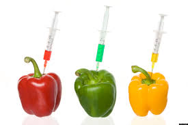 examples of genetically modified foods image information examples of genetically modified foods