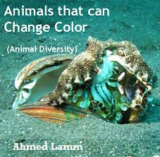 Colour Changing Animals Lessons Tes Teach