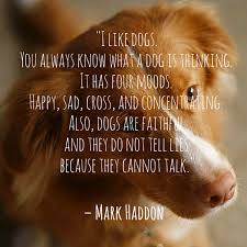 Quotes About Dogs Adorable Dog Quotes We Rounded Up The Best Of The Best