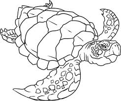 Small Picture Verry Old Sea Turtle Evolution Coloring Page Download Print