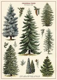 Christmas Tree In Chart Paper Amazon Com Cavallini Co Christmas Tree Chart Decorative