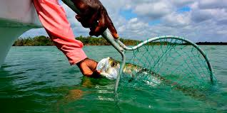 Bonefish Length Weight Chart Frontiers Travel