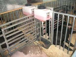 homemade pig waterer homemade pvc hog waterer