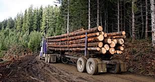Sustaining Logging Strengthening Families Boosting Rural Idaho