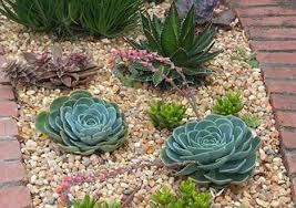 Small Picture Succulent Garden Design Garden Design Ideas