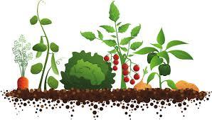 Afbeeldingsresultaat voor tuinieren op school