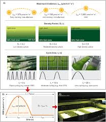 Design Of Raceway Ponds For Producing Microalgae High Throughput Optimisation Of Light Driven Microalgae