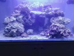 Primo acquario marino [archivio] acquaportal forum acquario