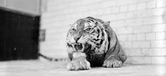 You Are Not Being Chased By A Tiger But Your Nervous System