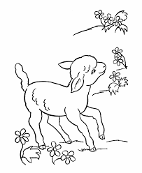 Small Picture Lamb Coloring Pages Miakenasnet