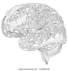 Small Picture Human Brain Doodle Decorative Curves Creative Stock Vector