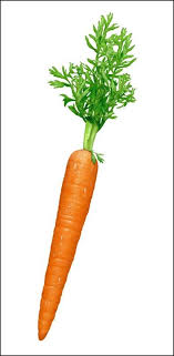 single carrot. Fine Single A Single Carrot In Single Carrot T