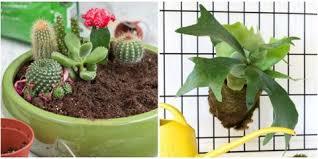 Amazing Indoor Plants