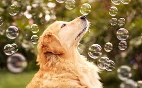 Resultado de imagen de perros jugando