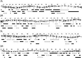 Genetic Modifier Screens In Drosophila Demonstrate A Role For Rho1