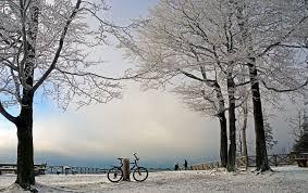 """Résultat de recherche d'images pour """"fahrrad im wald"""""""