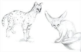 Animal Drawings 2 Cool Animal Drawings Baby Animal Drawings Easy