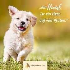 Wahre Liebe Meinhaustier Hundeliebe Hunde Sprüche Zitat