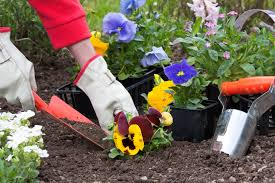 Take Advantage Of The Cooler Weather And Grow A Fall Garden Fall Gardening