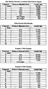Dna Fingerprinting Lab Answers Lab 6 Molecular Biology