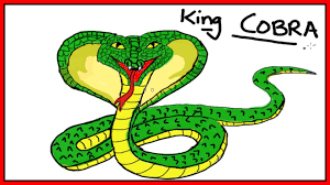 cobra drawing for kids. Simple Kids Easy Kids Drawing Lessons  How To Draw A KING COBRA For Cobra E