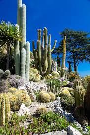 Small Picture 1242 best Endless Succulent Ideas images on Pinterest Succulents