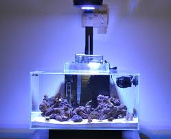 Prime Hd Light Coral Growth Under Ai Prime Reef2reef Saltwater And Reef