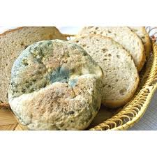 What Causes Mold On Bread Bread Mould A Bakery Problem With A
