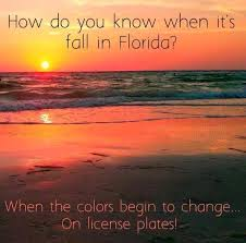 Florida Quotes New Quotes About Florida Endearing We're All About Palm Trees And 48