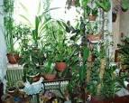 Фото комнатных цветов в доме