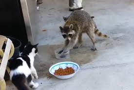 Image result for pictures of animals stealing each others food
