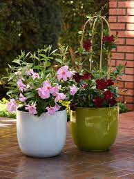 You can grow them in pots, but it takes too much work to be considered easy. Easy Plants To Grow In Pots Hgtv