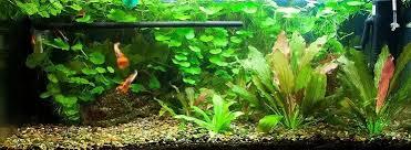 75 gallon aquarium the plete