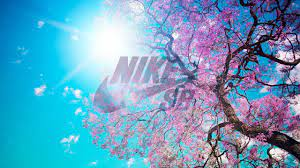 NIKE HD Wallpaper Free Download for ...