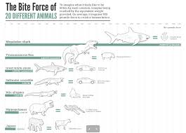 The Bite Force Of Different Animals