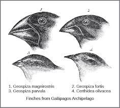 understanding evolution boundless biology