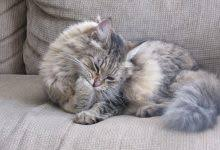 Cat Scratching And How to Save Your Furniture and Walls