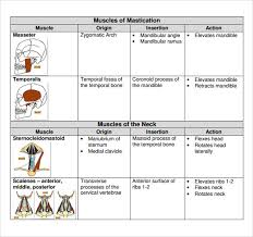 Muscle Action Chart Sample Muscle Chart 7 Free Documents In Pdf