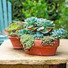 Container Garden Ideas  Eden Makers Blog By Shirley BovshowSucculent Container Garden Plans