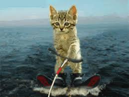 """Résultat de recherche d'images pour """"gif animé chat mignon"""""""