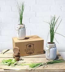 nature s grace indoor windowsill herb garden planter starter kit
