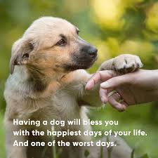 Hundesprüche Hundesprüche Dog Quotes Hundesprüche Hunde
