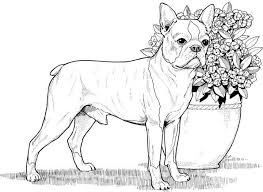 Then take a marker, gel pen, or some other coloring method and take a relaxing break. Free Collection Of Dog For Adults Coloring Pages Coloring Pages Library