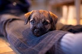 <b>Am</b> I Ready For A <b>Dog</b> - DogTime