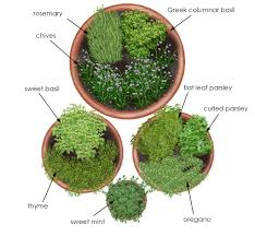 overhead view of herb garden in containers