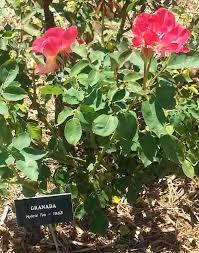 garden labels. Garden Markers Labels